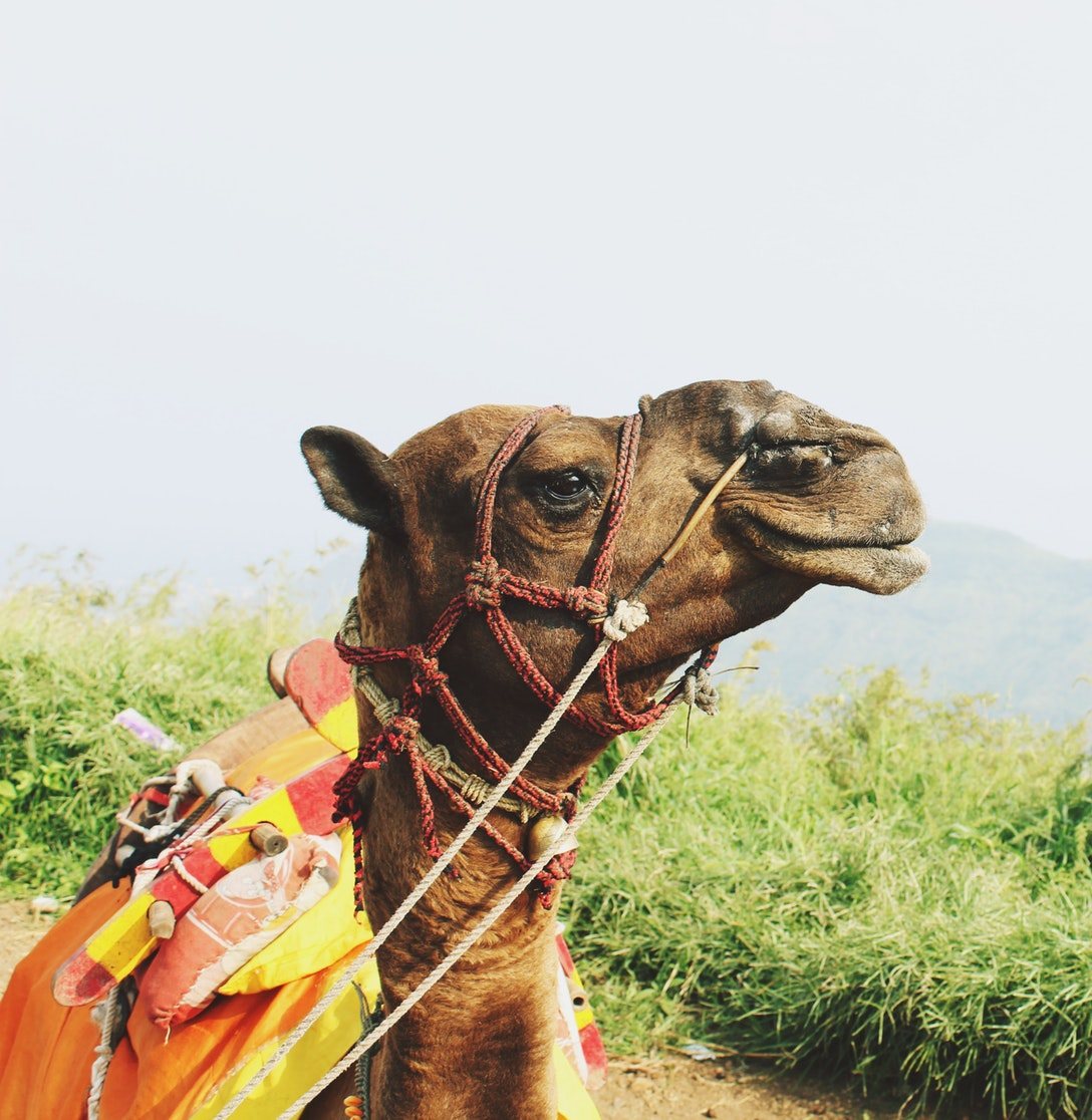 Camel Ride Experience for 2