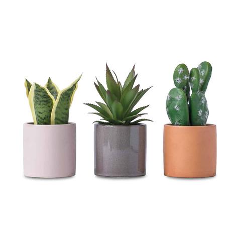 Pot Plants/Herbs