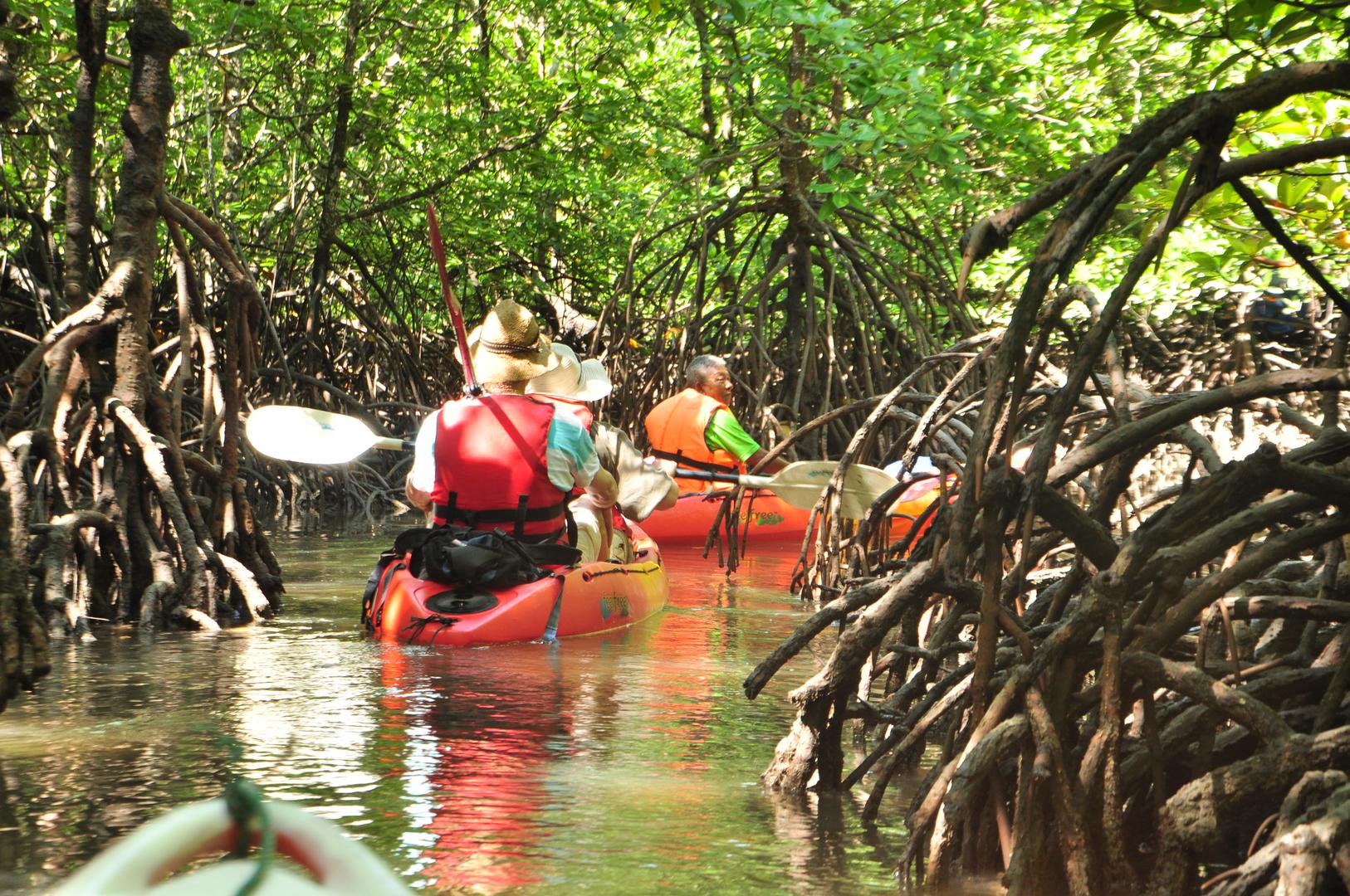 Explore the mangroves on Langkawi