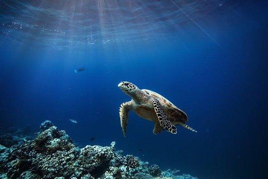 Scuba Diving Day Trip