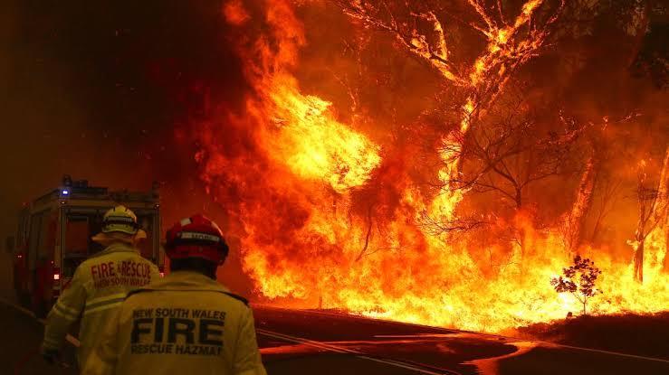 Donations to Australian bushfires